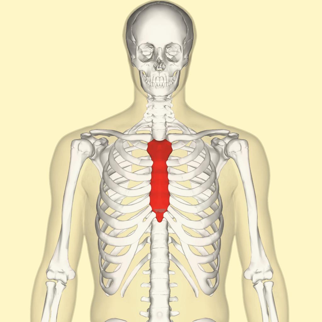 sternum injury