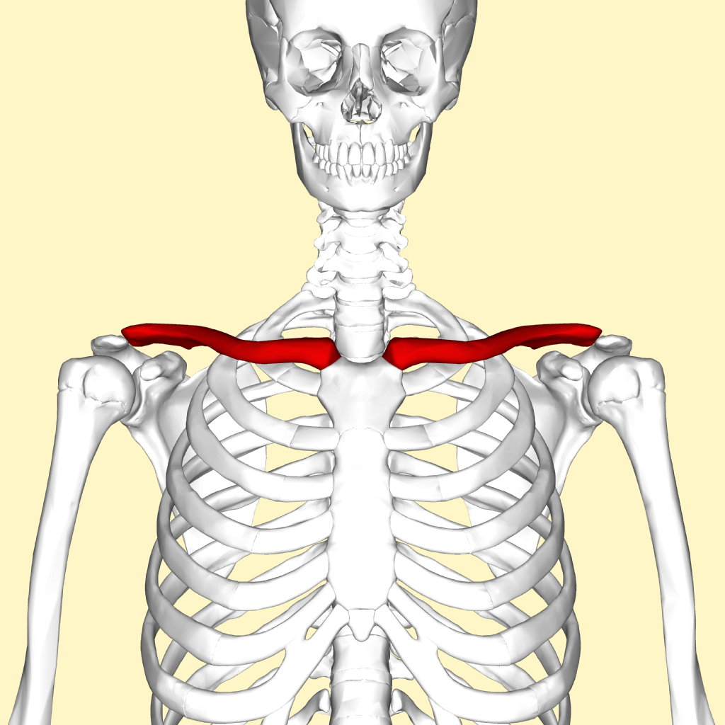 clavicle injury