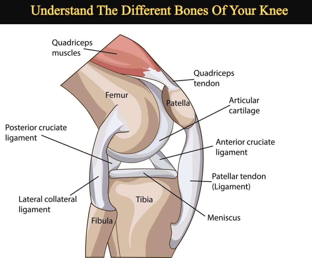 The Bones in Your Knee